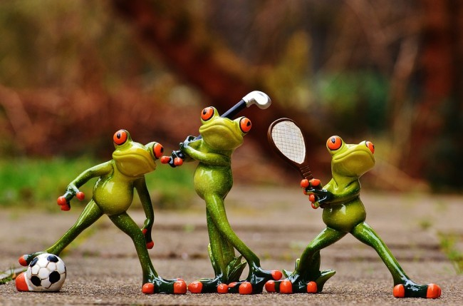 frogs-1212209_960_720